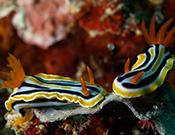Unterwasser-Foto: Volker Klostermann